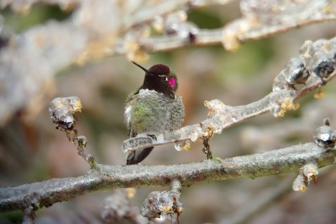 Superior HOW TO KEEP THAT HUMMER FEEDER GOING IN FREEZING WEATHER