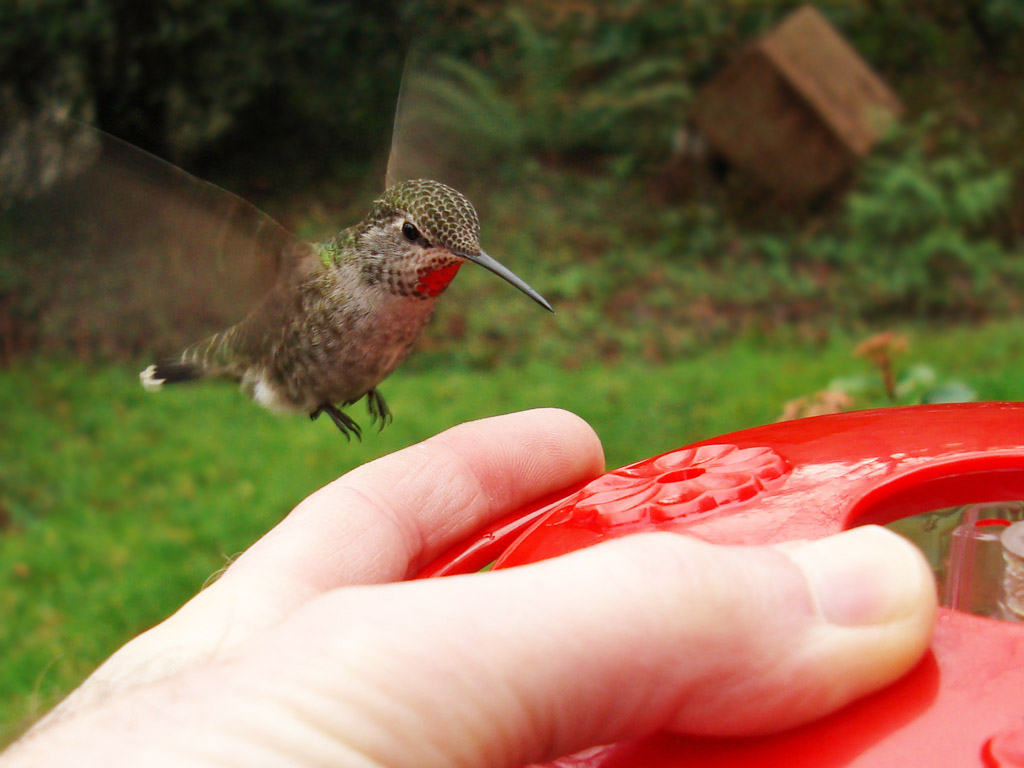 search for anything from birds to bats feeders to natural pest control - Homemade Hummingbird Food