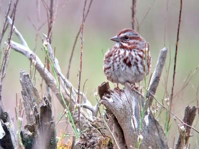 Aves del patio trasero | Pic de las naturalezas en línea