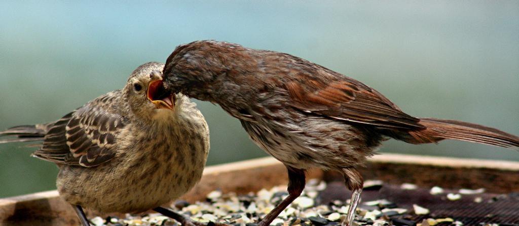 Ask the Expert | Backyard Bird Shop