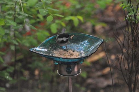 Bird Baby Food