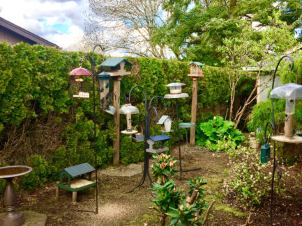 Good Create A Food Court For Birds