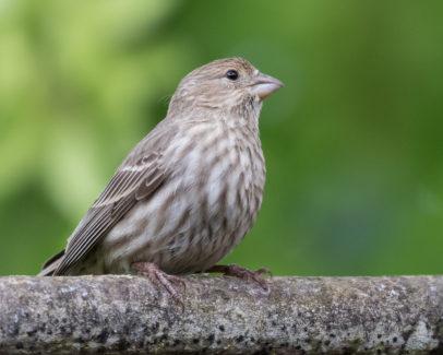 The Brand New Birder: Bringing Home The Birds