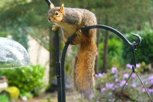 naughtysquirrel